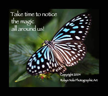 magical-butterfly