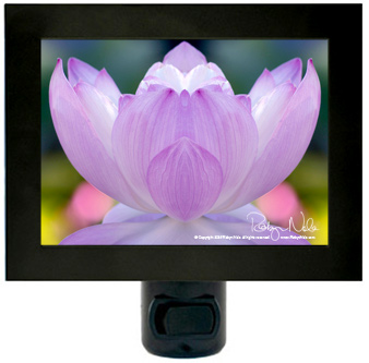 awakening-lotus-flower-nightlight