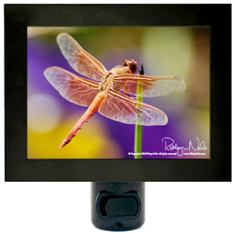dragonfly-nightlight-2