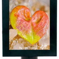 """Finding Love in Nature"" Heart Night Light"