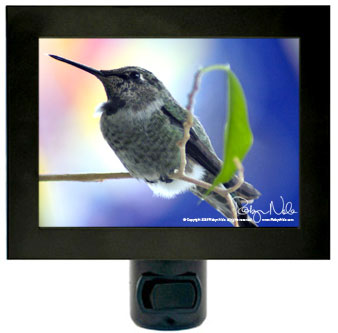 hummingbird-nightlight11