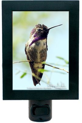 hummingbird-nightlight2