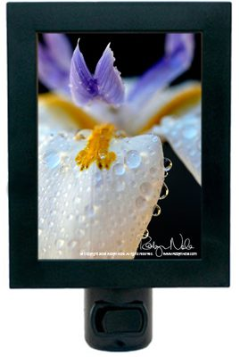 iris-night-light5