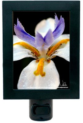 iris-night-light6