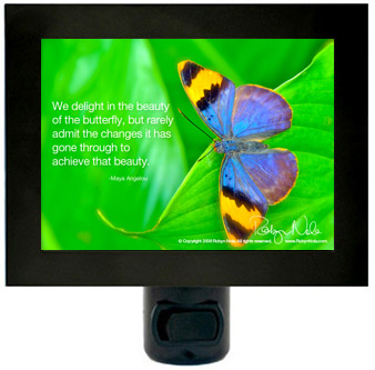maya-butterfly-night-light-lrg