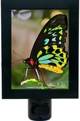 Butterfly-heart-night-light