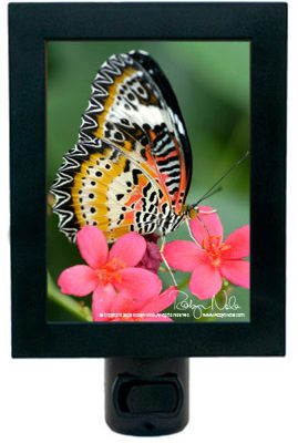 butterfly-gifts-nightlights