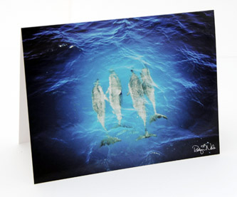 dolphins-hawaii-greeting-card