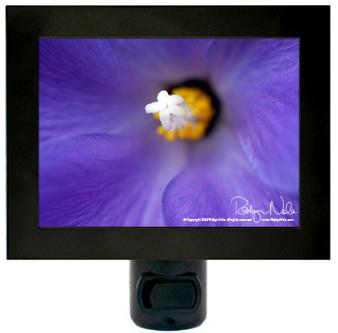 hibiscus-nightlight7