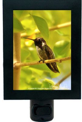 hummingbird-inspirational-gifts