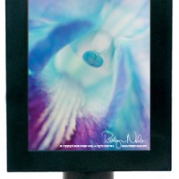 """Enchanted Orchid"" Flower Night Light"