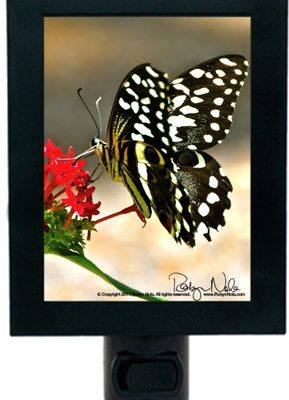 beautiful-butterfly-gifts