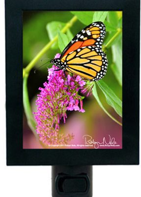 butterfly-nightlight-inspirational-gifts