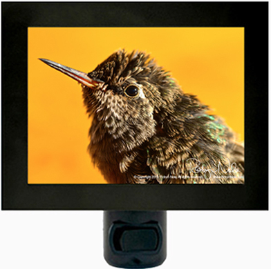 Baby Hummingbird Nightlight