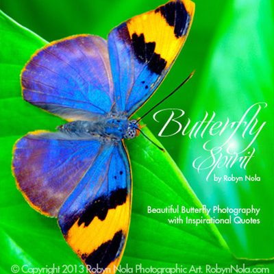 Robyn Nola Beautiful Butterfly Photography and Inspirational Quote Cards