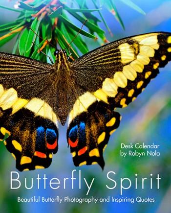 Beautiful Butterfly calendar