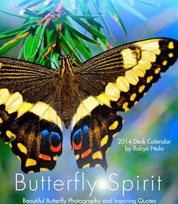 Butterfly-Calendar-by-Robyn-Nola