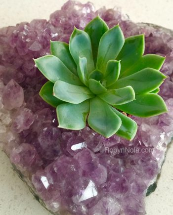 crystals and succulents, beautiful gifts from nature